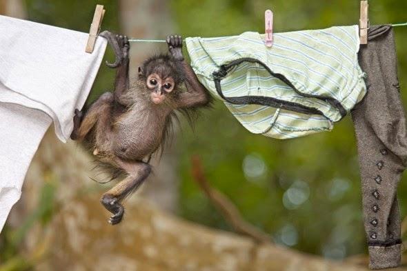 Os-macaquinhos-mais-fofos-e-adoráveis-do-mundo (16)