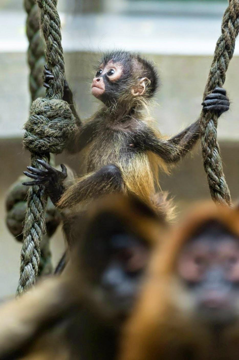 Os-macaquinhos-mais-fofos-e-adoráveis-do-mundo (20)