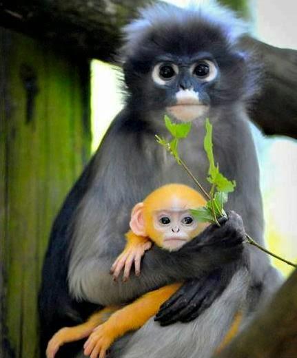 Os-macaquinhos-mais-fofos-e-adoráveis-do-mundo (21)