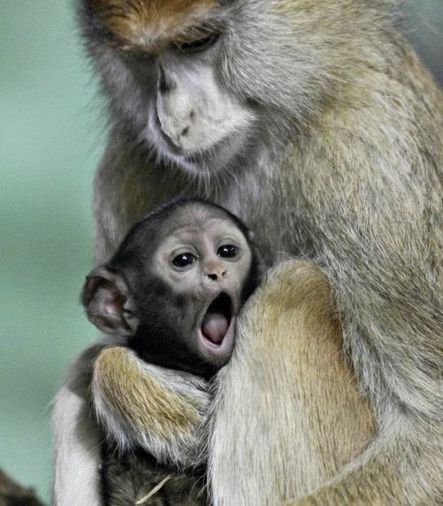 Os-macaquinhos-mais-fofos-e-adoráveis-do-mundo (3)