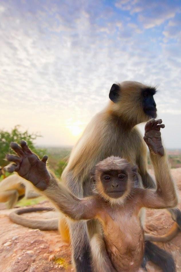 Os-macaquinhos-mais-fofos-e-adoráveis-do-mundo (6)
