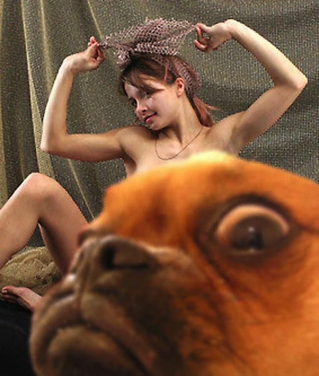 Os melhores photobombs de cachorros (10)