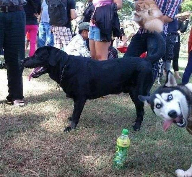 Os melhores photobombs de cachorros