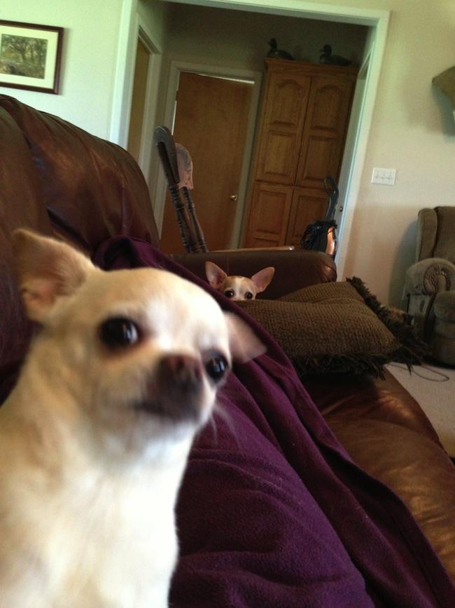 Os melhores photobombs de cachorros (7)