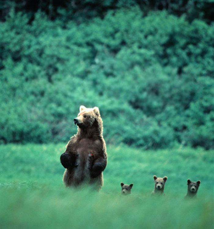 Os pais mais fofos do mundo animal (10)