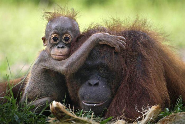 Os pais mais fofos do mundo animal (12)