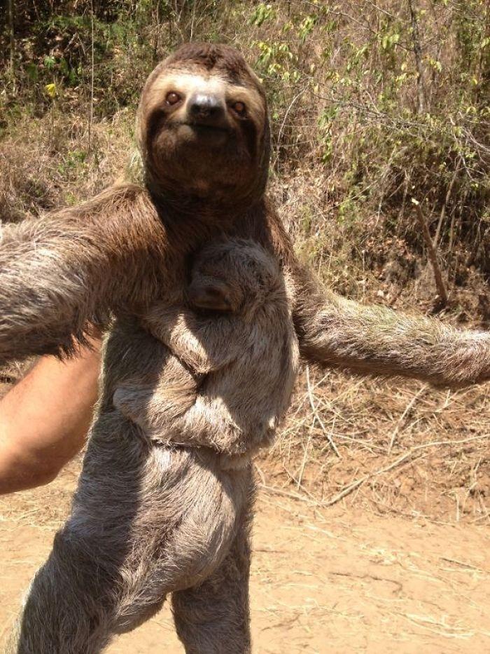 Papais e mamães mais fofos do mundo animal (4)