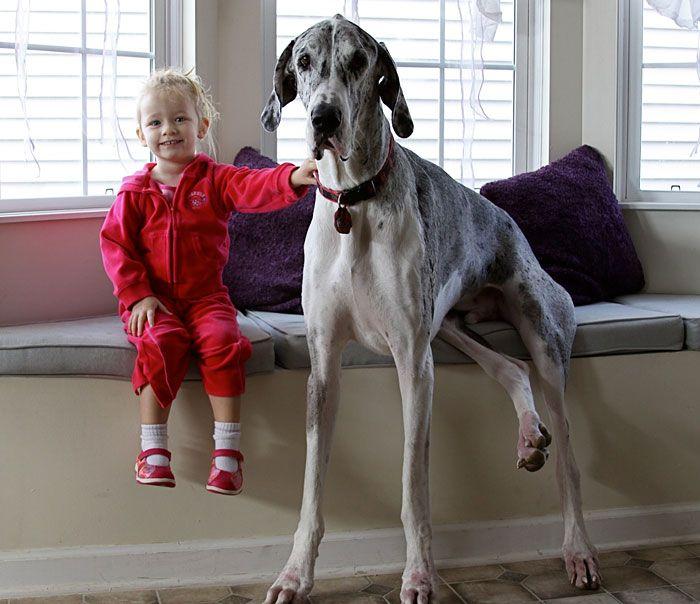 Pequenas-crianças-com-seus-enormes-cães-Blog-Animal (11)
