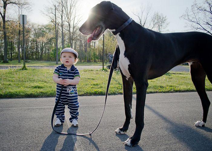 Pequenas-crianças-com-seus-enormes-cães-Blog-Animal (12)
