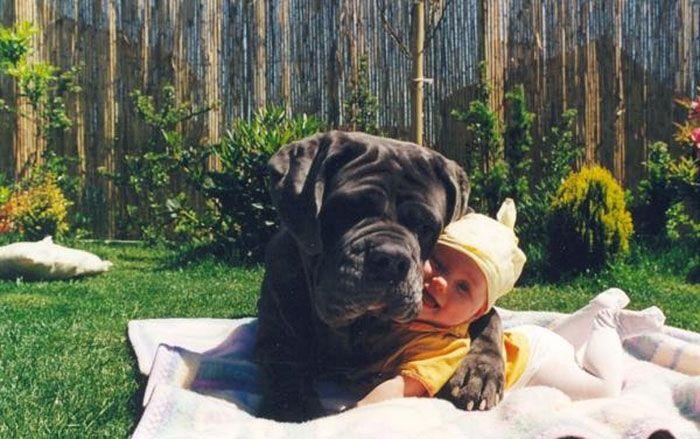 Pequenas-crianças-com-seus-enormes-cães-Blog-Animal (13)