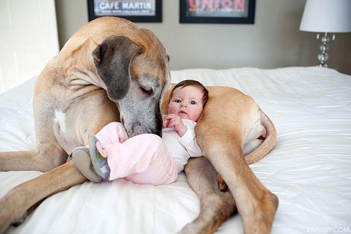 Pequenas-crianças-com-seus-enormes-cães-Blog-Animal (14)