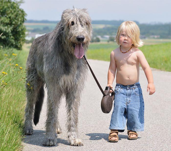 Pequenas-crianças-com-seus-enormes-cães-Blog-Animal (16)