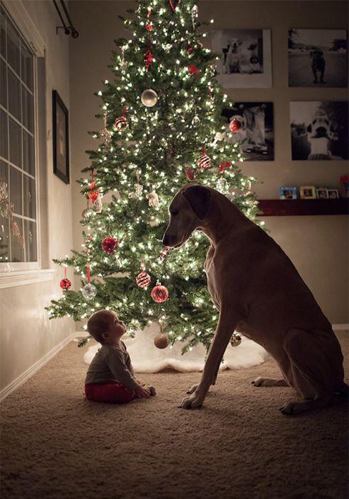 Pequenas-crianças-com-seus-enormes-cães-Blog-Animal (17)