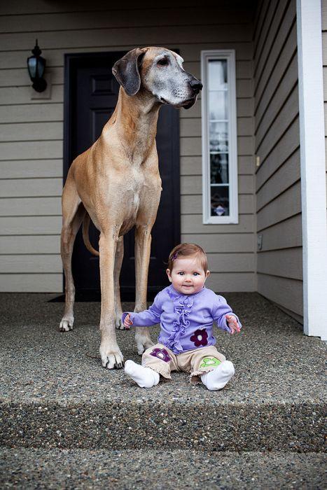 Pequenas-crianças-com-seus-enormes-cães-Blog-Animal (18)
