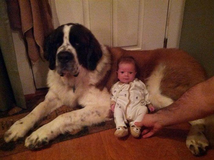 Pequenas-crianças-com-seus-enormes-cães-Blog-Animal (2)