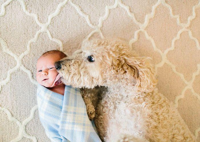 Pequenas-crianças-com-seus-enormes-cães-Blog-Animal (22)