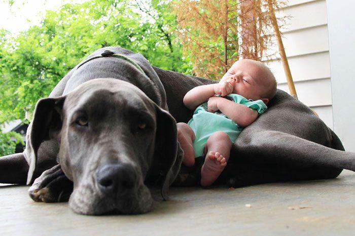 Pequenas-crianças-com-seus-enormes-cães-Blog-Animal (4)