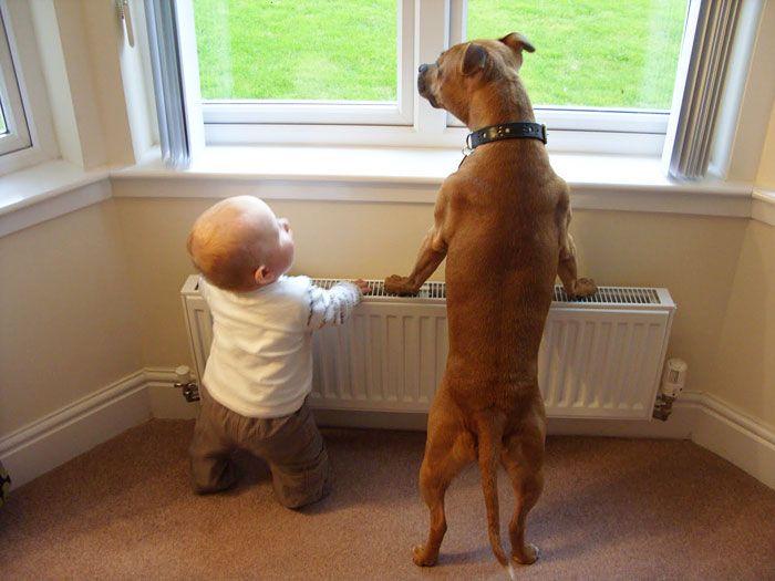 Pequenas-crianças-com-seus-enormes-cães-Blog-Animal (5)