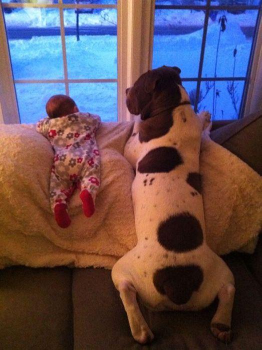 Pequenas-crianças-com-seus-enormes-cães-Blog-Animal (9)