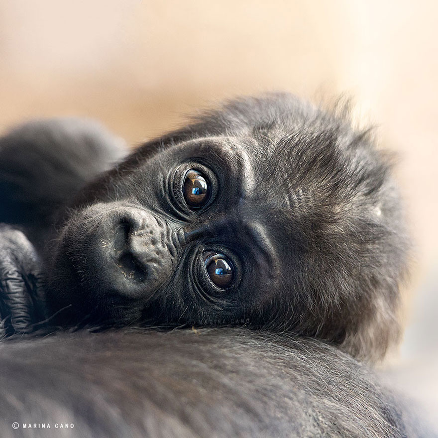 A majestosa beleza de animais selvagens capturados por Marina Cano (10)