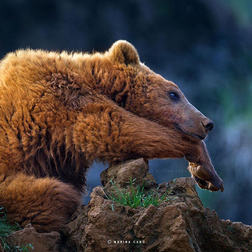 A majestosa beleza de animais selvagens capturados por Marina Cano (2)
