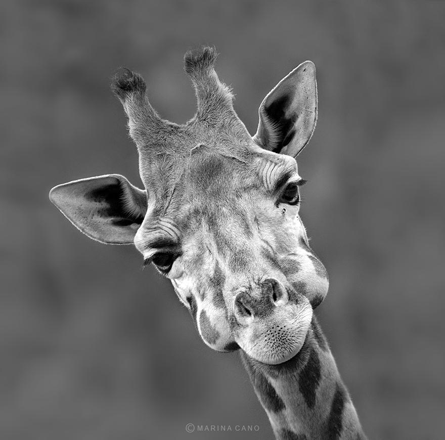 A majestosa beleza de animais selvagens