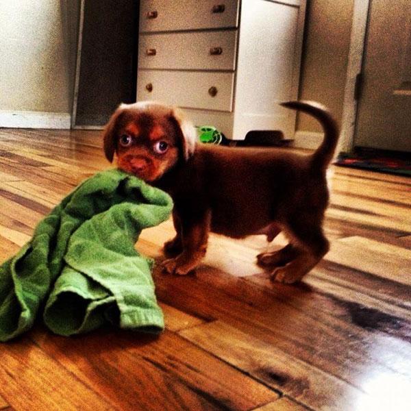 Animais-estrábicos-e-fofos-Blog-Animal (13)