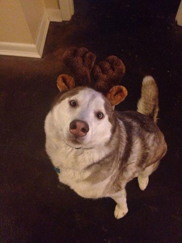 Animais-estrábicos-e-fofos-Blog-Animal (18)