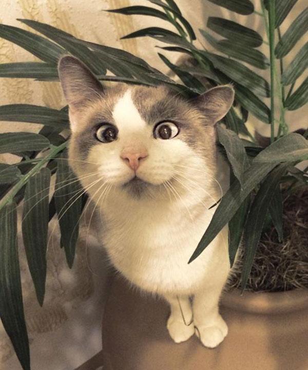 Animais-estrábicos-e-fofos-Blog-Animal (2)