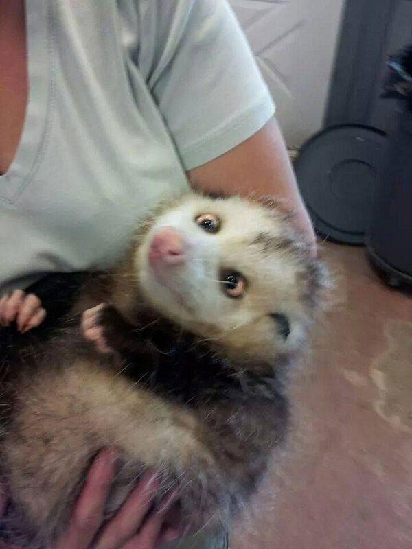 Animais-estrábicos-e-fofos-Blog-Animal (3)