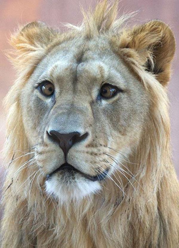 Animais-estrábicos-e-fofos-Blog-Animal (6)
