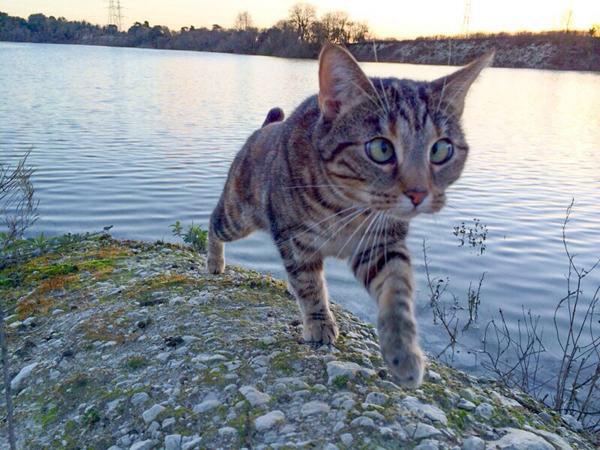 Animais-estrábicos-e-fofos-Blog-Animal (9)