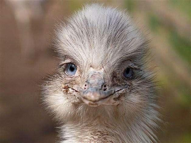 Animais-extremamente-fotogênicos-Blog-Animal (11)