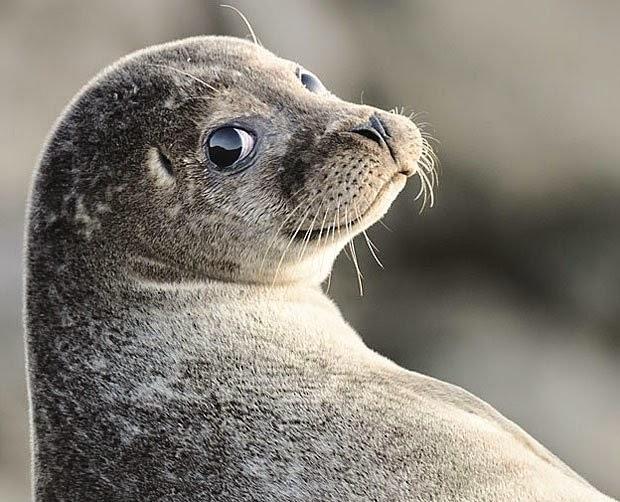 Animais-extremamente-fotogênicos-Blog-Animal (26)