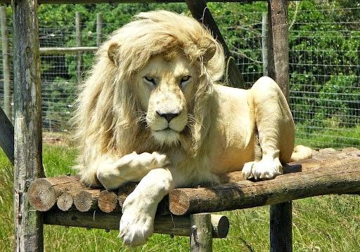 Animais-extremamente-fotogênicos-Blog-Animal (9)