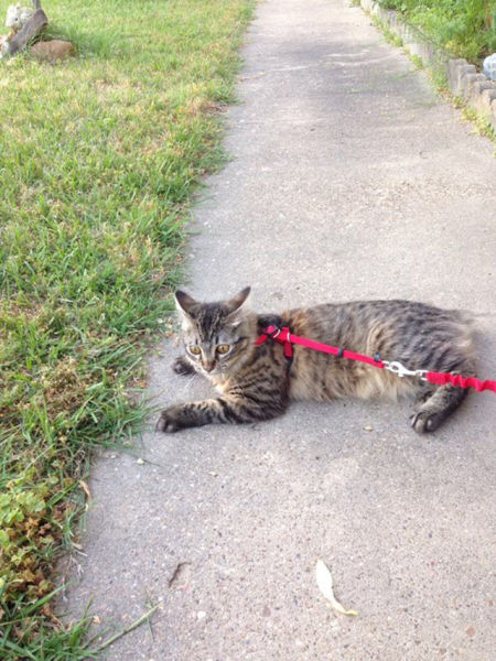 As-reações-hilárias-de-gatos-saindo-pela-primeira-vez-de-casa-Blog-Animal  (1)