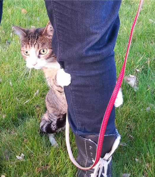 As-reações-hilárias-de-gatos-saindo-pela-primeira-vez-de-casa-Blog-Animal  (10)