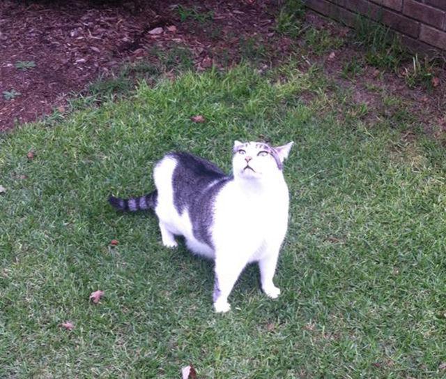 As-reações-hilárias-de-gatos-saindo-pela-primeira-vez-de-casa-Blog-Animal  (14)