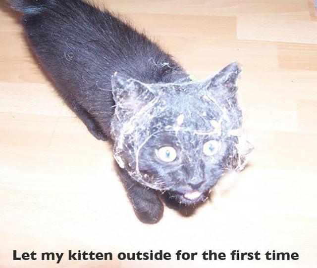 As-reações-hilárias-de-gatos-saindo-pela-primeira-vez-de-casa-Blog-Animal  (15)