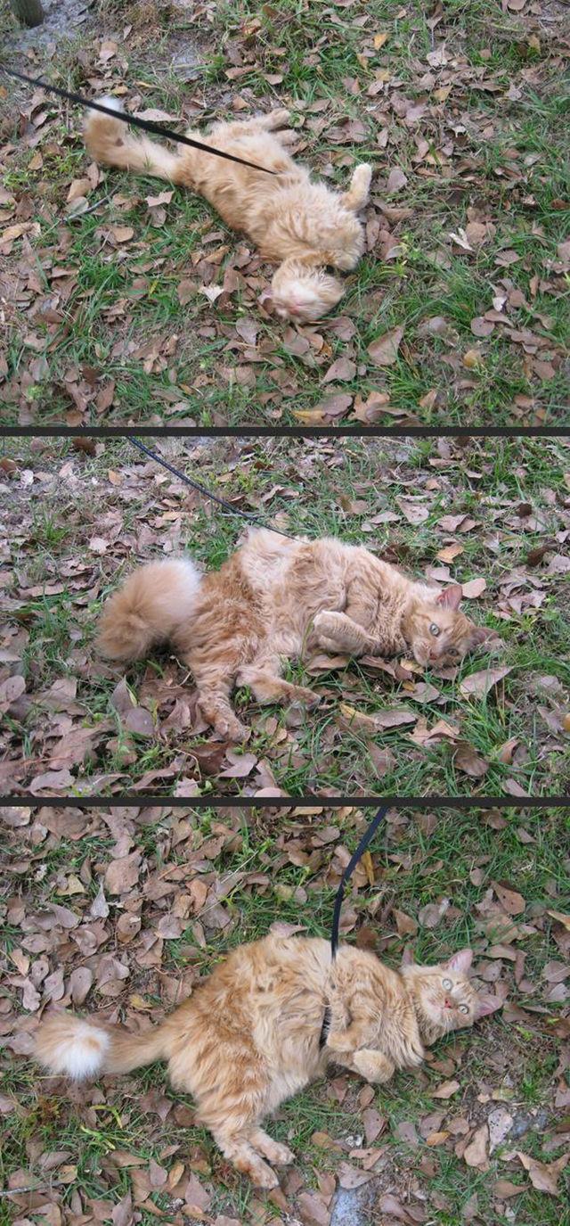 As-reações-hilárias-de-gatos-saindo-pela-primeira-vez-de-casa-Blog-Animal  (18)