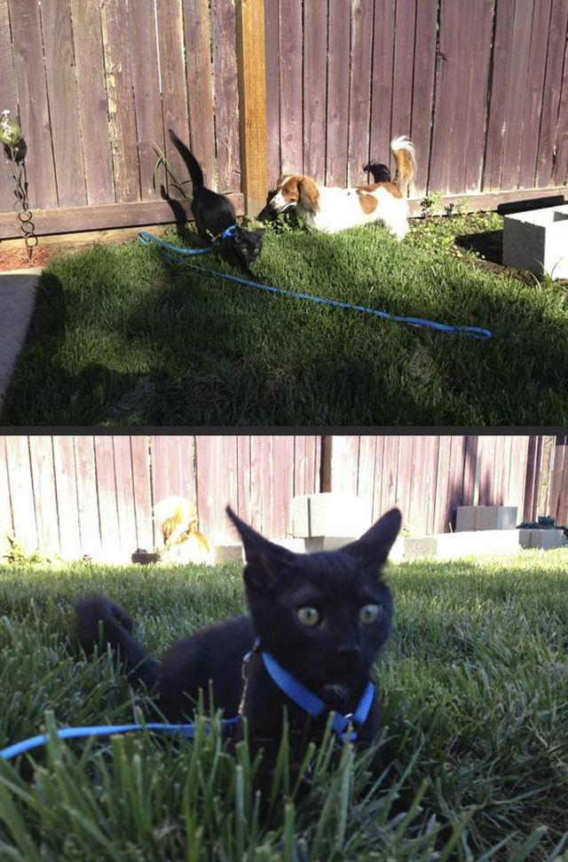As-reações-hilárias-de-gatos-saindo-pela-primeira-vez-de-casa-Blog-Animal  (19)