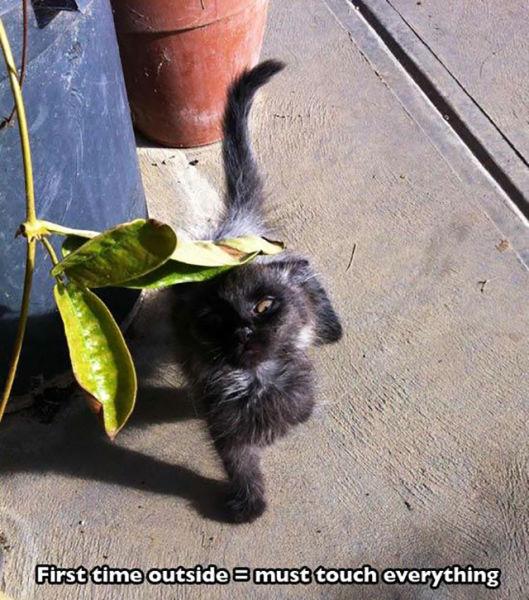 As-reações-hilárias-de-gatos-saindo-pela-primeira-vez-de-casa-Blog-Animal  (2)