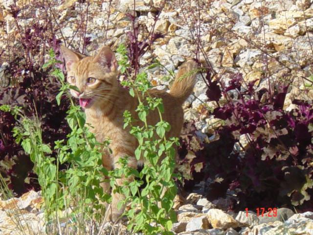 As-reações-hilárias-de-gatos-saindo-pela-primeira-vez-de-casa-Blog-Animal  (5)