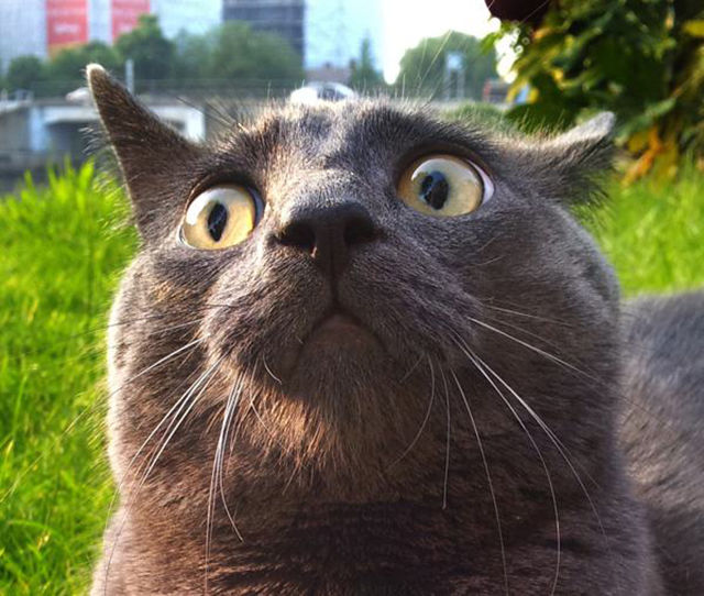 As-reações-hilárias-de-gatos-saindo-pela-primeira-vez-de-casa-Blog-Animal  (7)