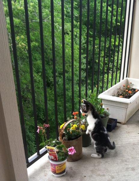 As-reações-hilárias-de-gatos-saindo-pela-primeira-vez-de-casa-Blog-Animal  (9)