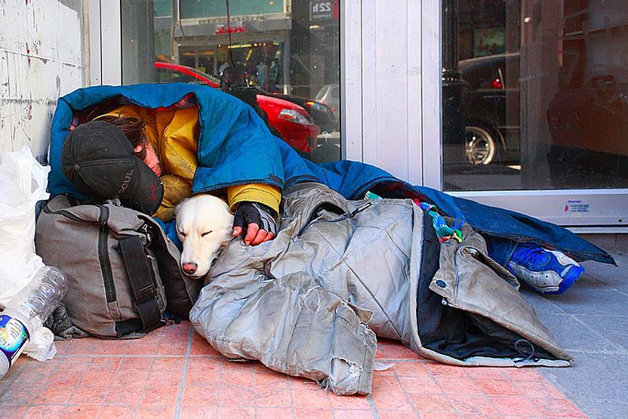 Cães amam seus donos, não importa quanto dinheiro eles tenham.. (2)