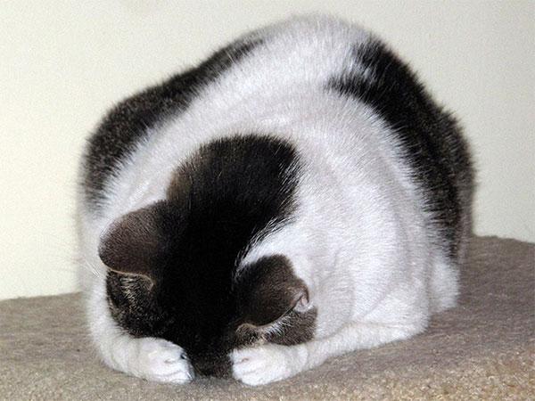 Cães-e-gatos-brincando-de-esconde-esconde-Blog-Animal (1)