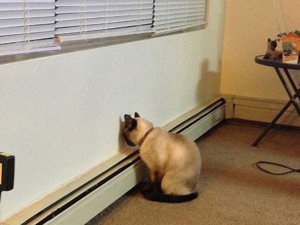 Cães-e-gatos-brincando-de-esconde-esconde-Blog-Animal (10)