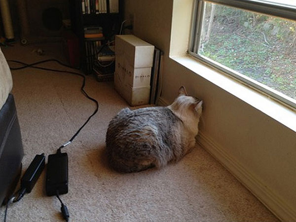 Cães-e-gatos-brincando-de-esconde-esconde-Blog-Animal (13)