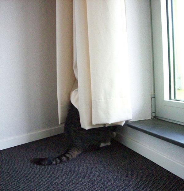 Cães-e-gatos-brincando-de-esconde-esconde-Blog-Animal (14)